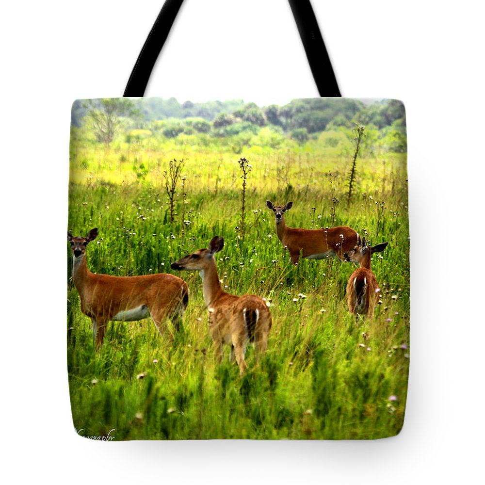 Whitetail Deer Tote Bag featuring the photograph Whitetail Deer Family by Barbara Bowen