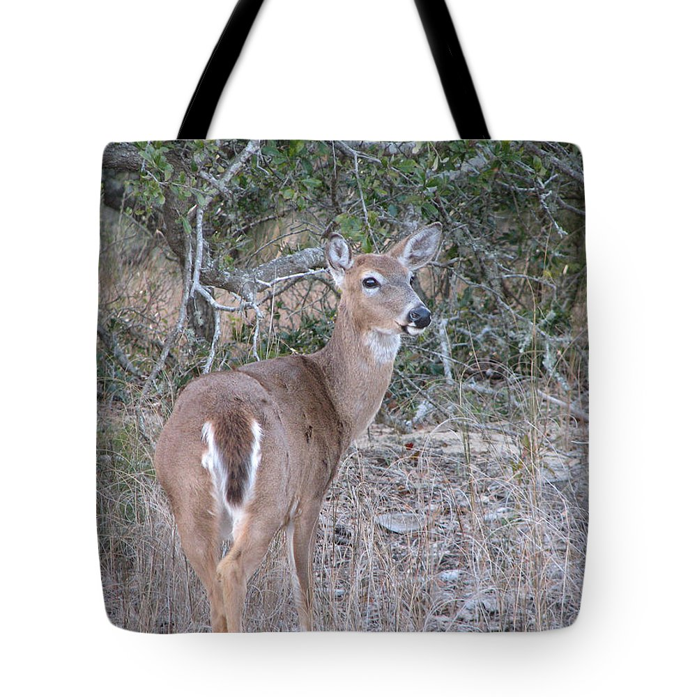 Deer Tote Bag featuring the photograph Whitetail Deer II by Stacey May