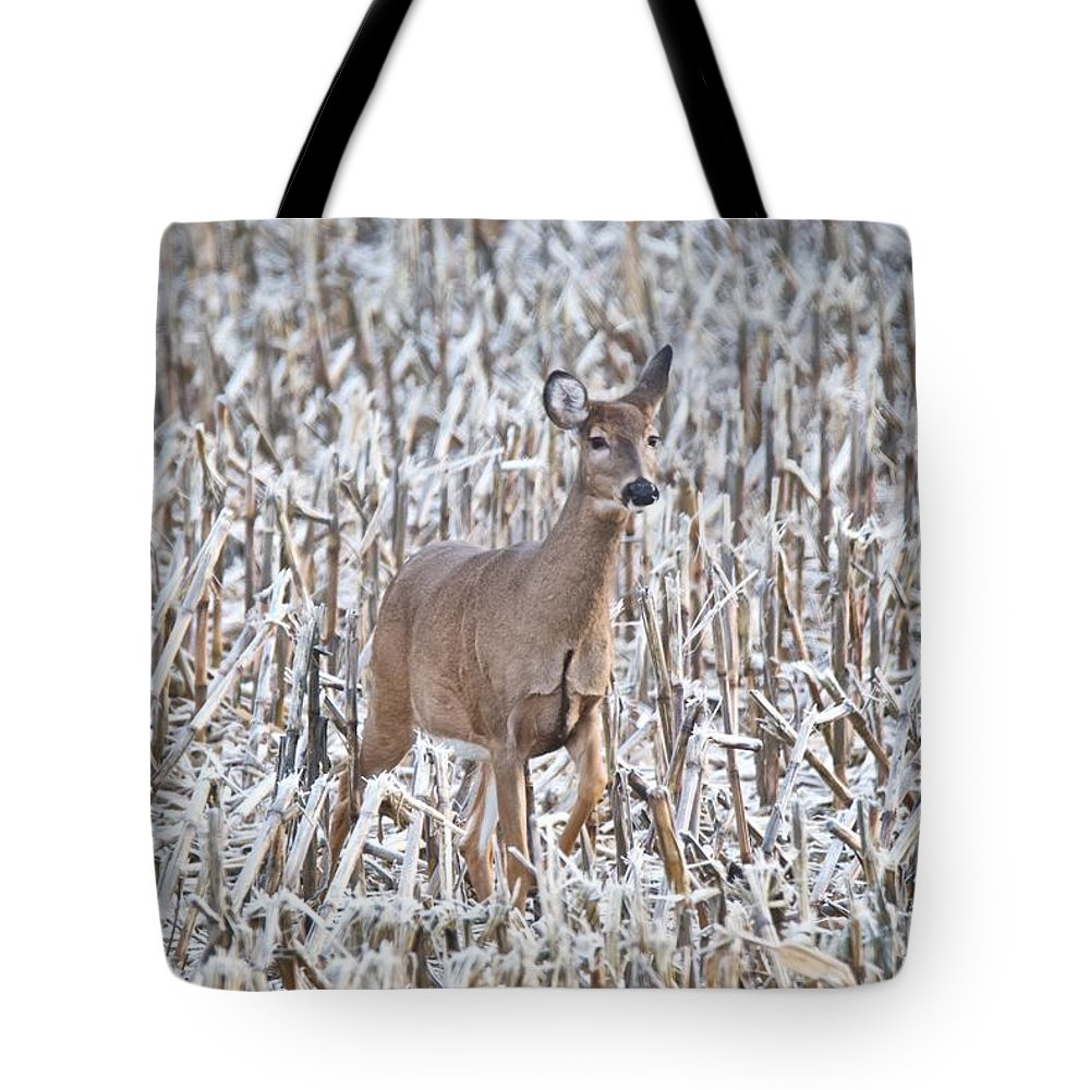 Designs Similar to Whitetail In Frosted Corn 537