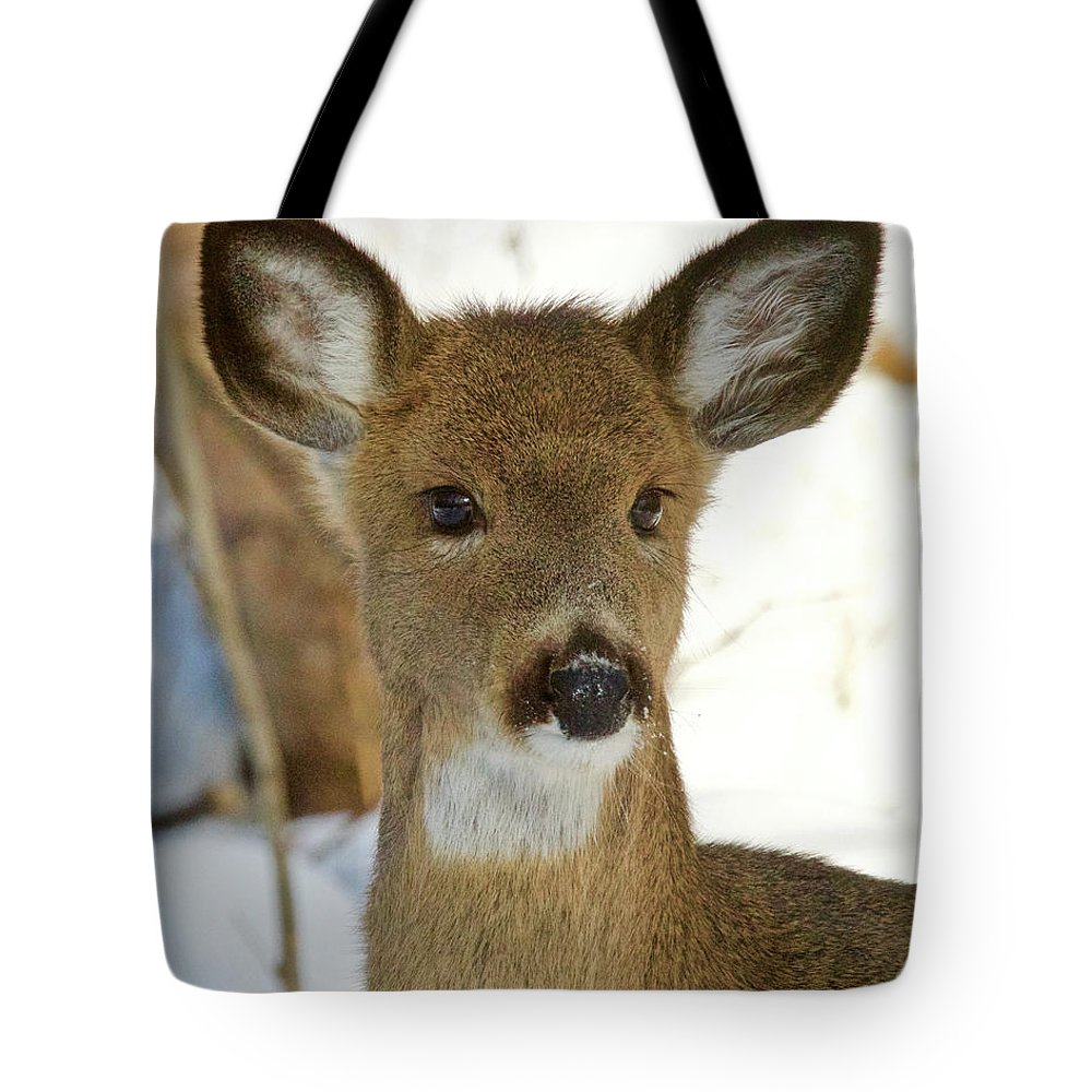 Nature Tote Bag featuring the photograph Whitetail Yearling 1059 by Michael Peychich