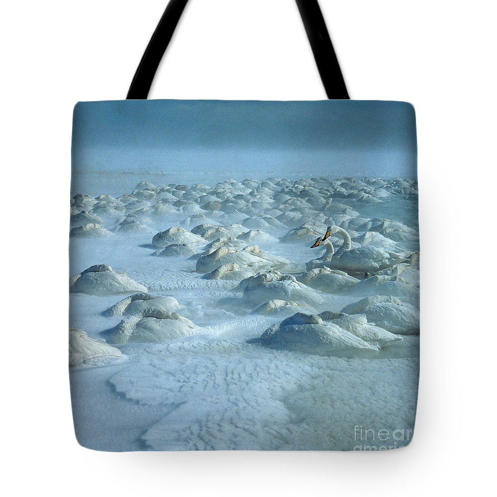 Whooper Swan Tote Bag featuring the photograph Whooper Swans In Snow by Teiji Saga and Photo Researchers