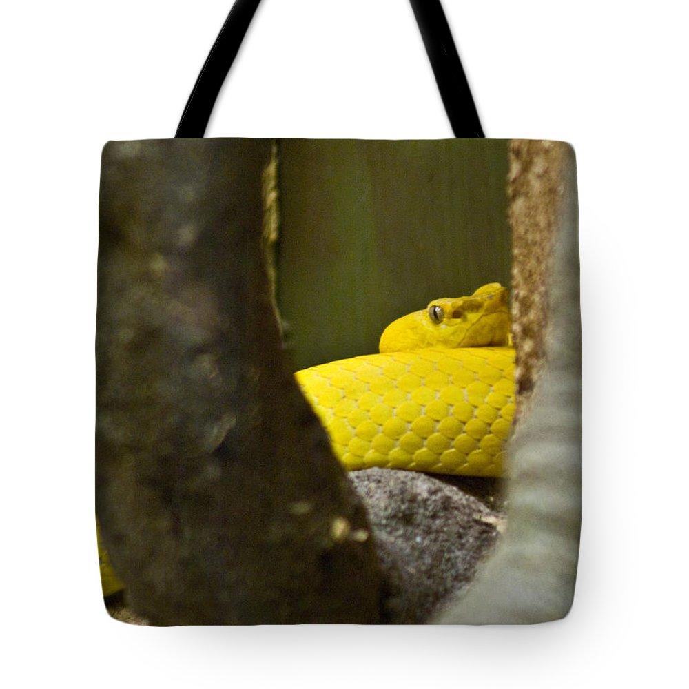 Yellow Tote Bag featuring the photograph Wicked Snake by Douglas Barnett