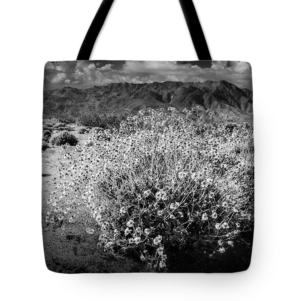Art Tote Bag featuring the photograph Wild Desert Flowers Blooming In Black And White In The Anza-borrego Desert State Park by Randall Nyhof