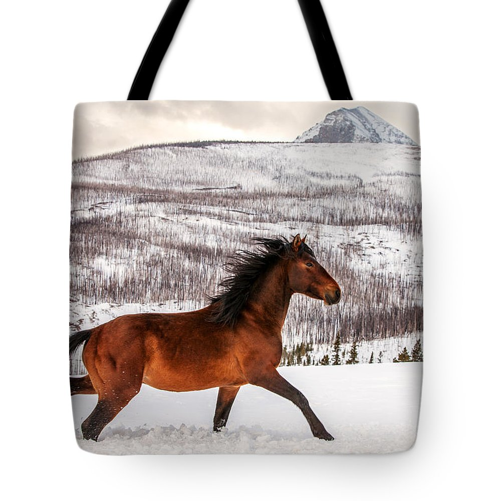 Brown Horse Lifestyle Products