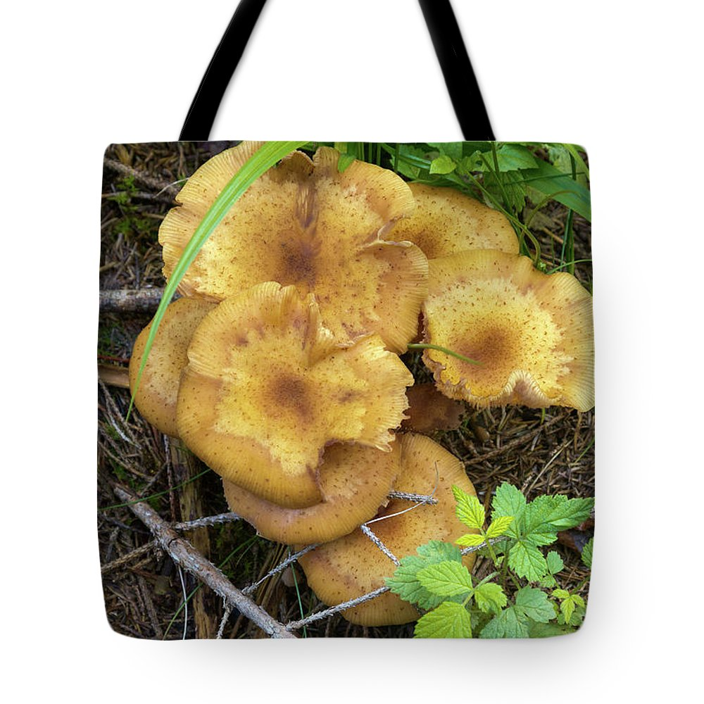 Wild Tote Bag featuring the photograph Wild Mushrooms 1 by Bernard Barcos