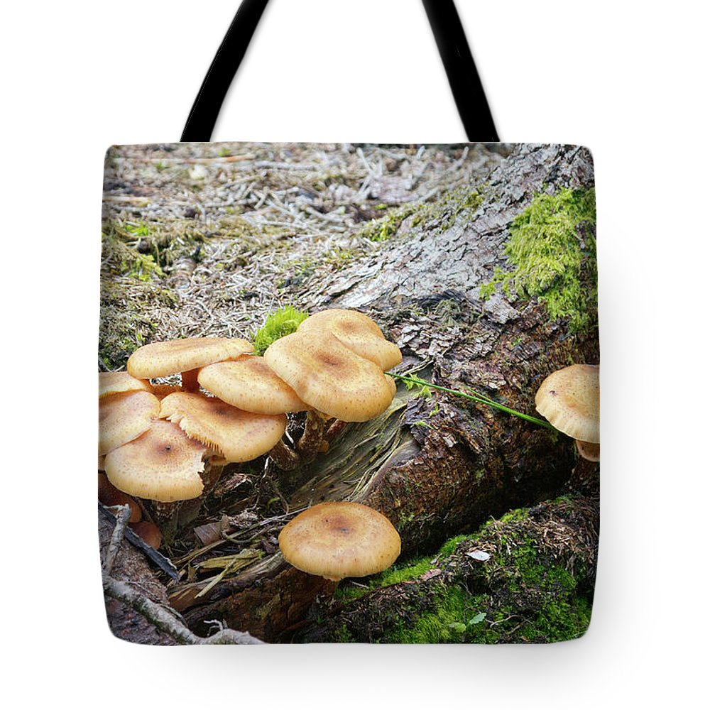 Wild Tote Bag featuring the photograph Wild Mushrooms 2 by Bernard Barcos