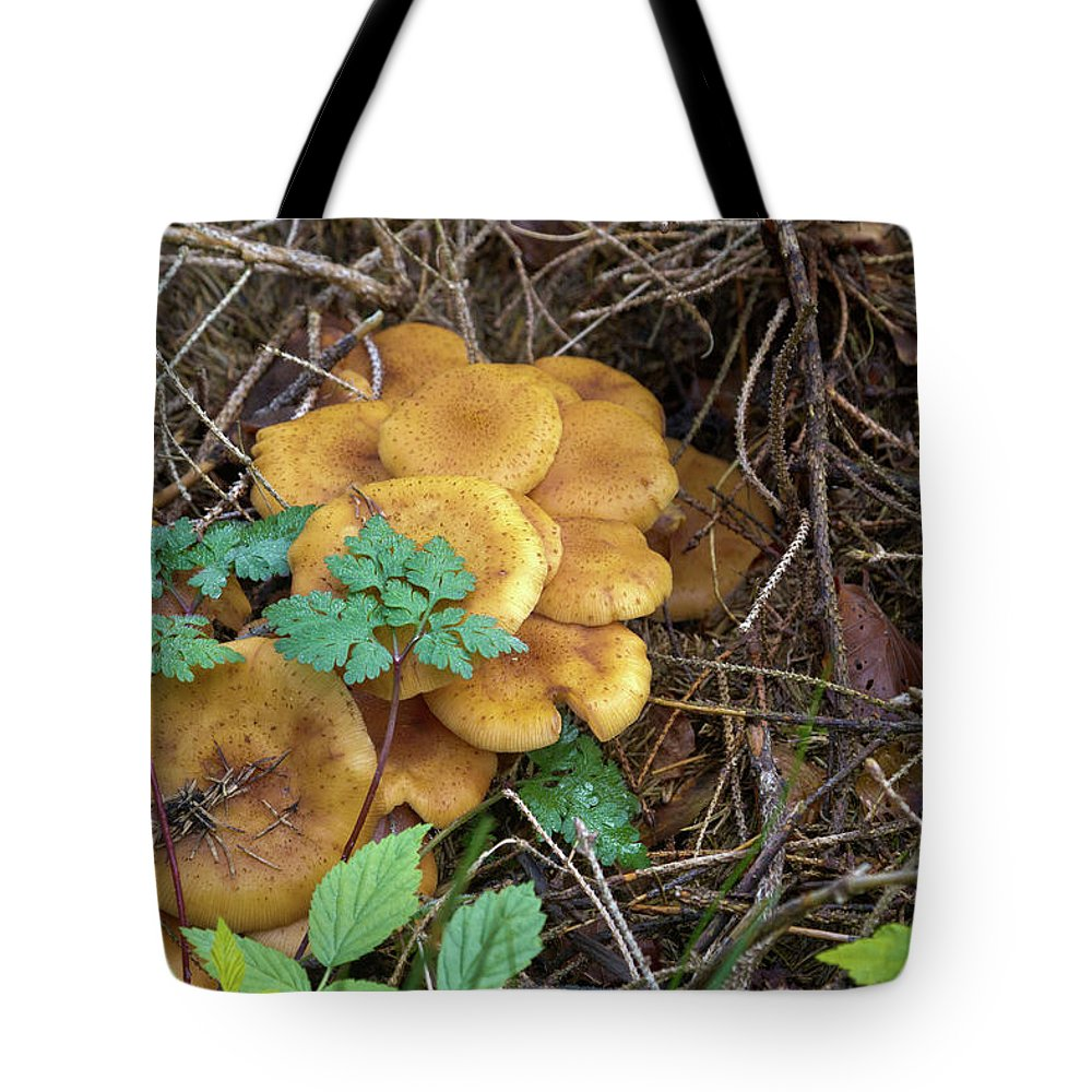 Wild Tote Bag featuring the photograph Wild Mushrooms 3 by Bernard Barcos