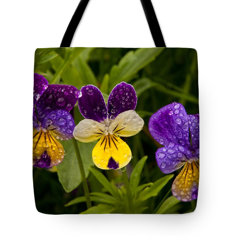 Wildflowers Tote Bag featuring the photograph Wild Pansy Trio by Irwin Barrett