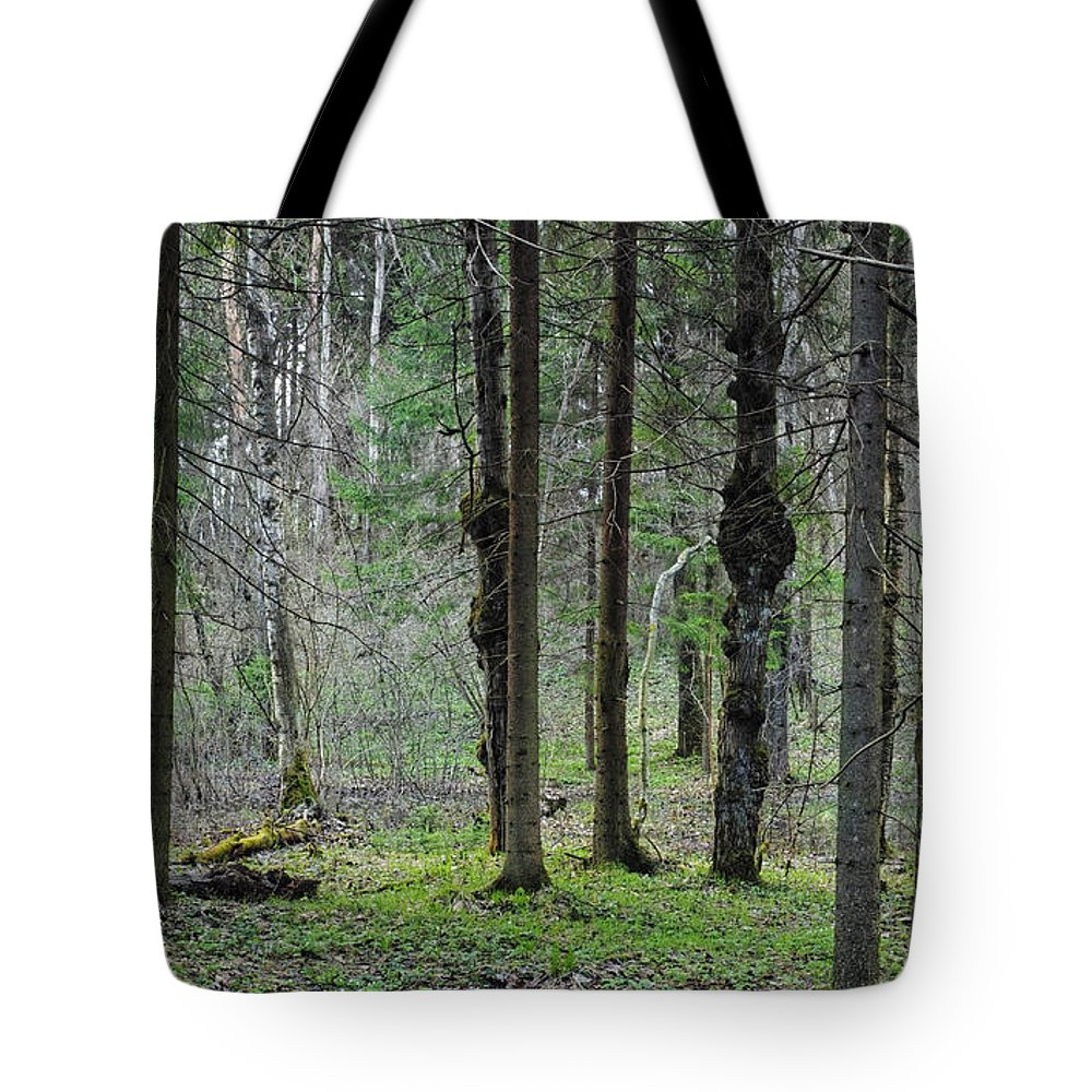 Wild Tote Bag featuring the photograph Wild Spring Forest by Vadzim Kandratsenkau