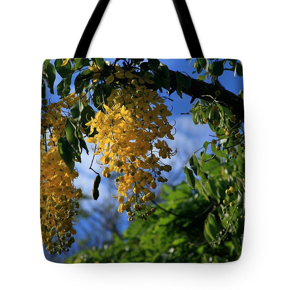 Aloha Tote Bag featuring the photograph Wilhelmina Tenney Rainbow Shower Tree Makawao Maui Flowering Trees Of Hawaii by Sharon Mau