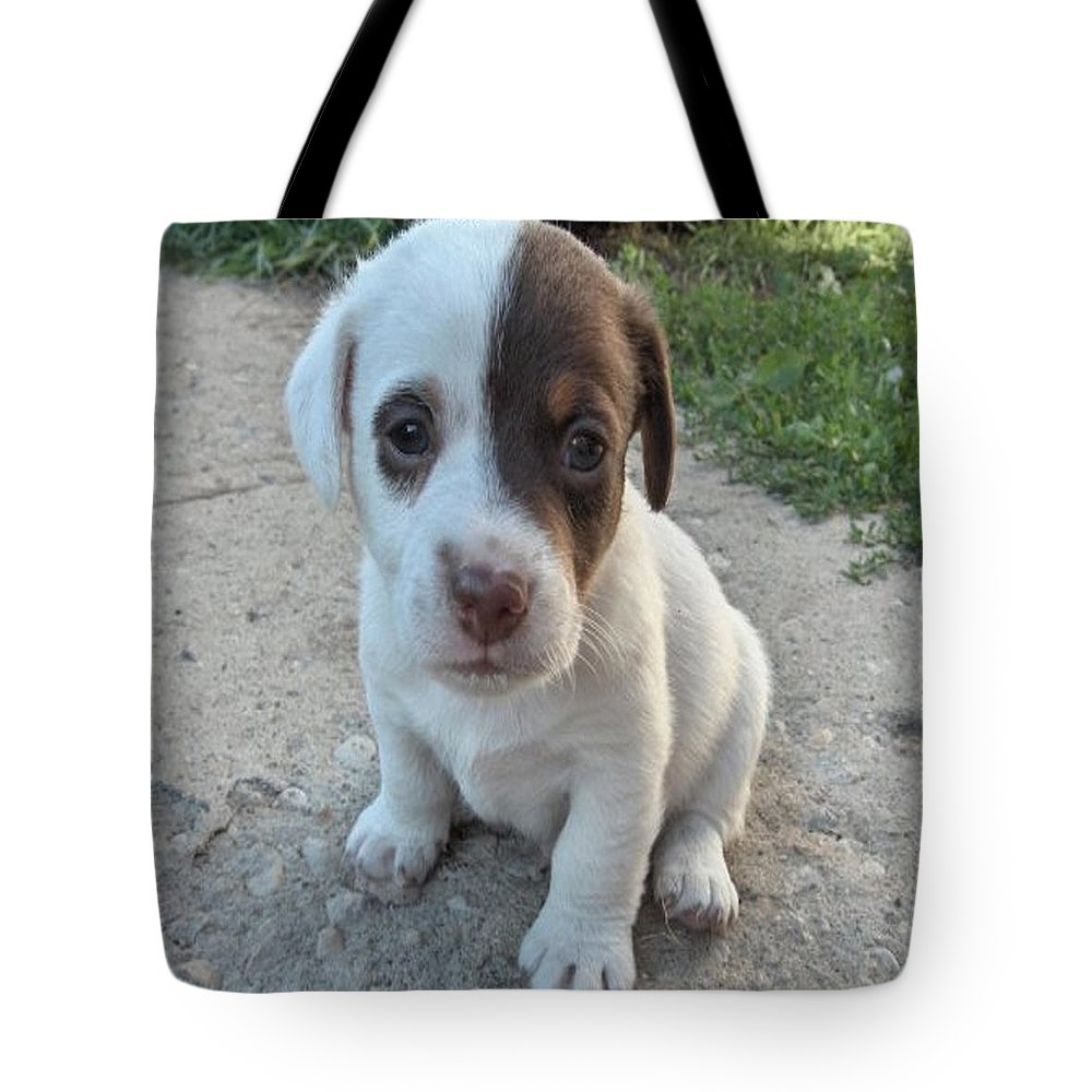 Puppy Jack Russell Terrior Dog Dogs Pets Animals Domestic Puppies Cute Tote Bag featuring the photograph Will You Be My Friend by Andrea Lawrence