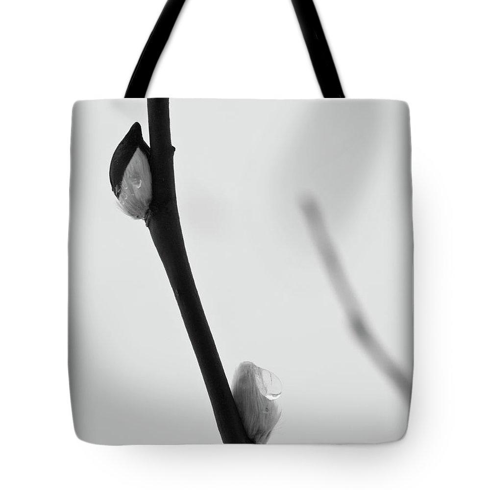 Lehtokukka Tote Bag featuring the photograph Willow Catkins 4 by Jouko Lehto