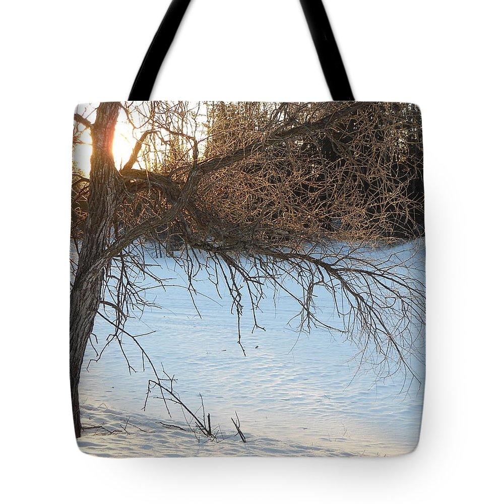 Sunrise Tote Bag featuring the photograph Willow Tree At Sunrise by Kent Lorentzen
