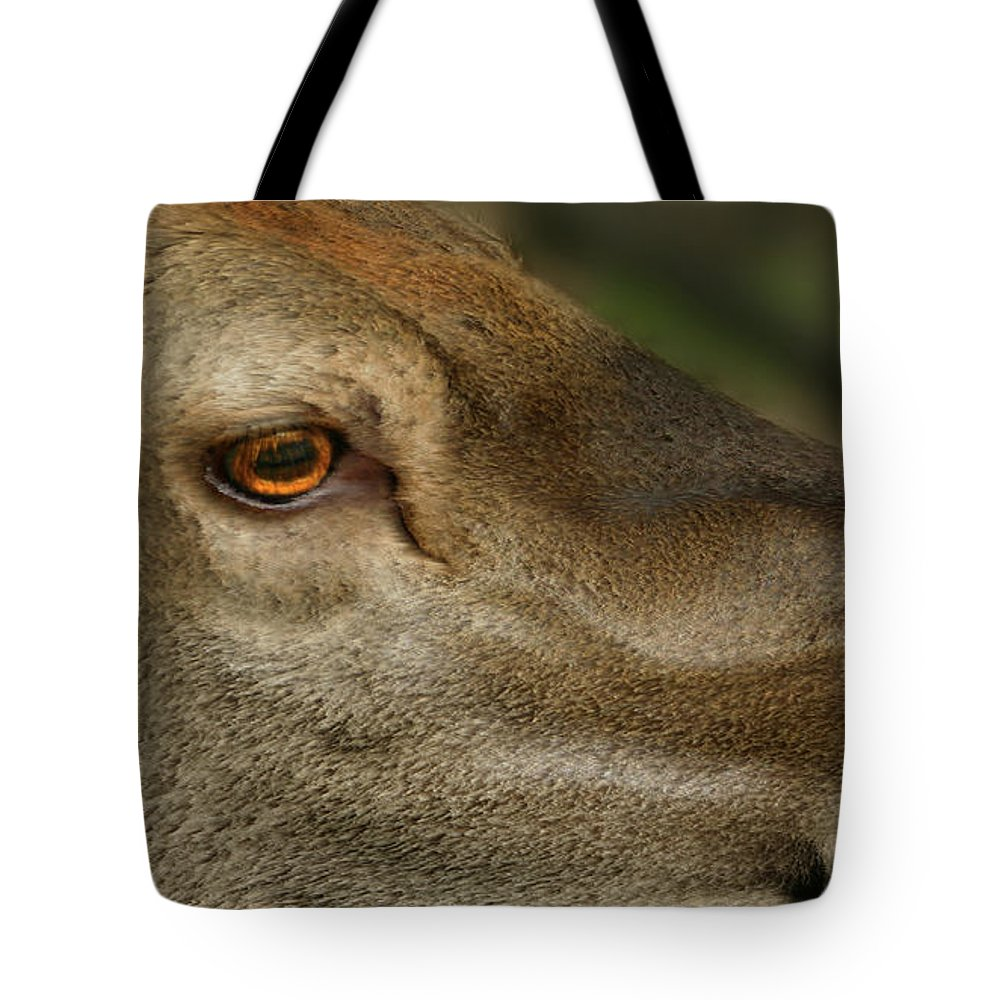 Wind Tote Bag featuring the photograph Wind Over Red Deer by Wayne King