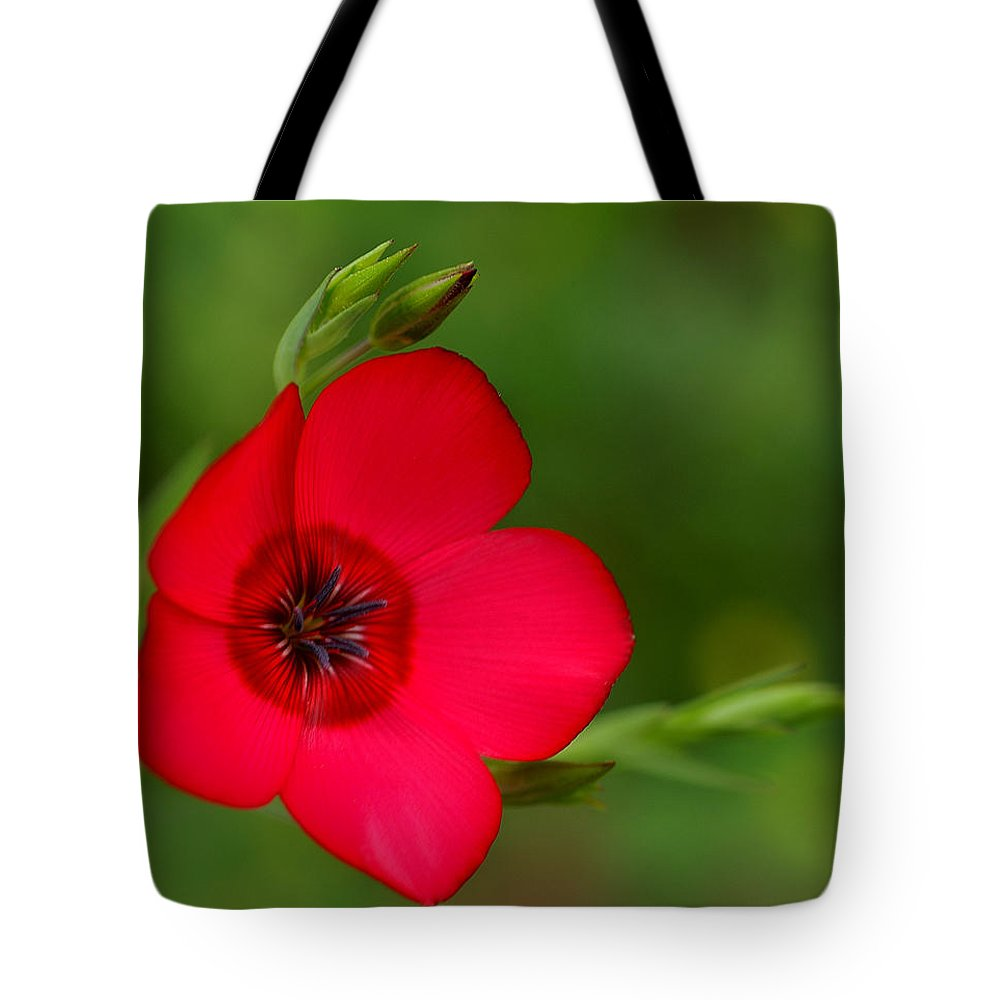 Annual Flox Tote Bag featuring the photograph Red Annual Flox by Bill Morgenstern