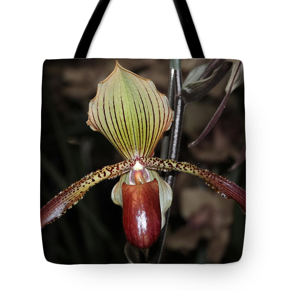 Orchid Tote Bag featuring the photograph Winged Orchid by Mary Haber