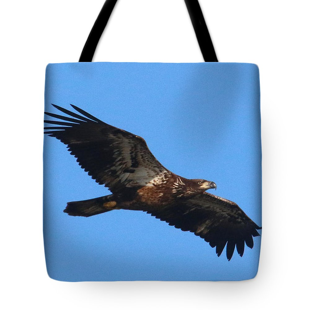 Bald Eagle Tote Bag featuring the photograph Wings Of Eagles by Karen Lindquist