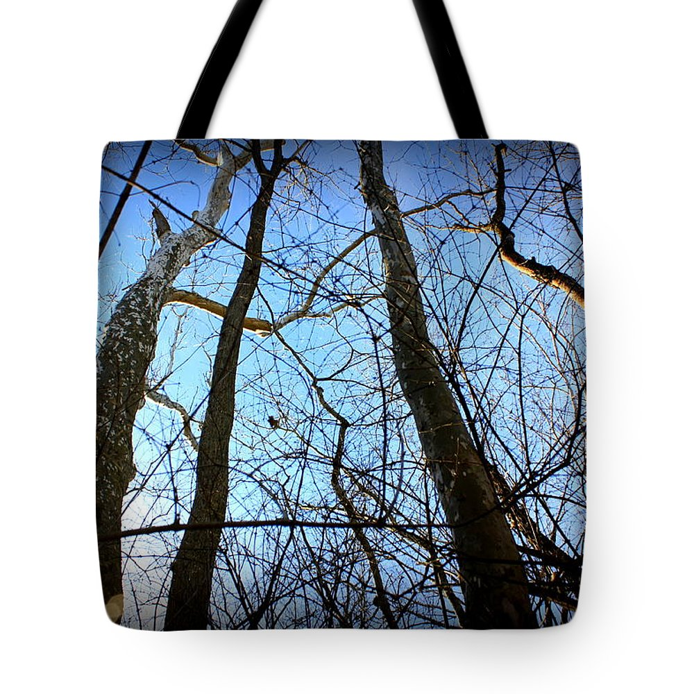 Sunset Tote Bag featuring the photograph Winter Birch by Mary Collins