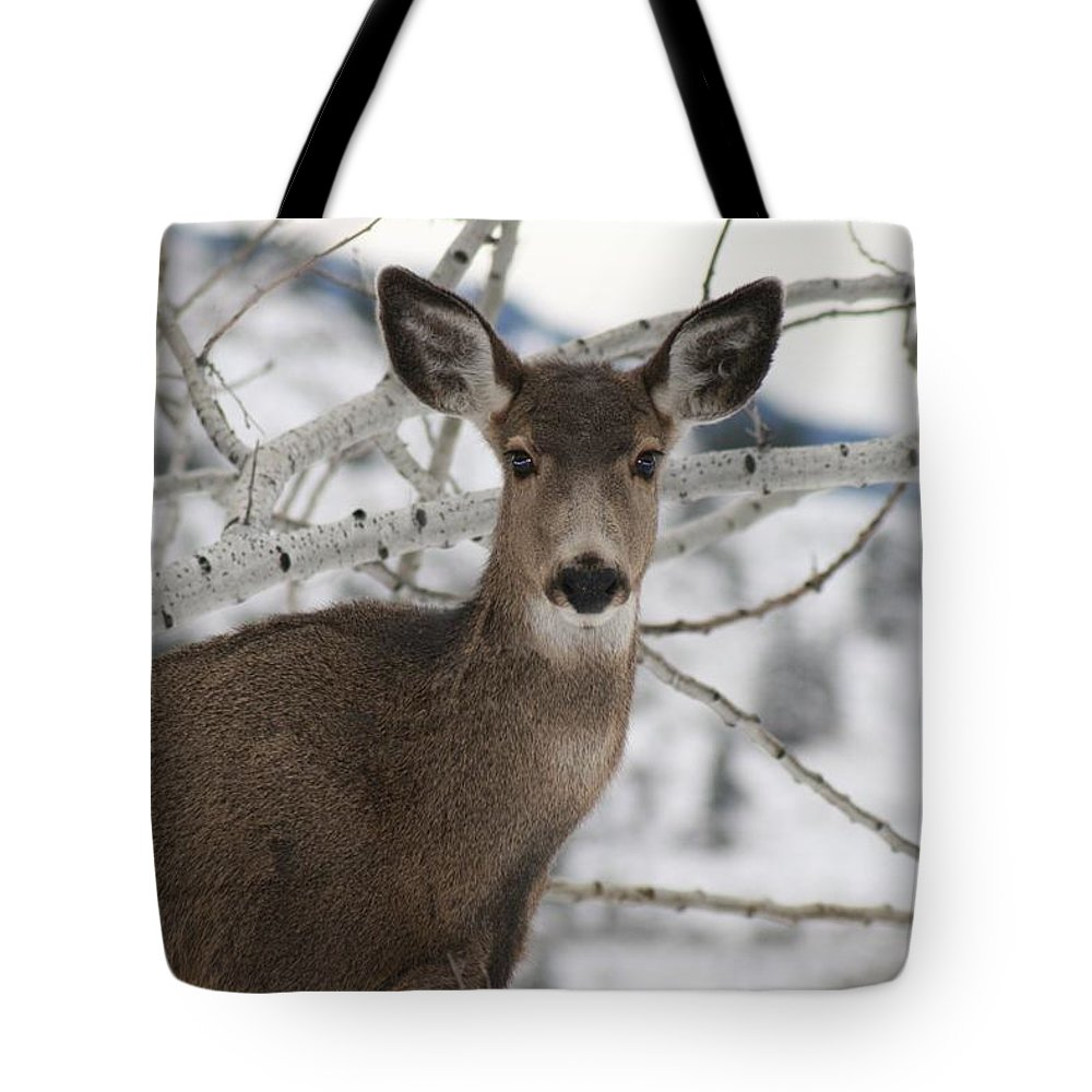 White Tail Deer Tote Bag featuring the photograph Winter Doe Of The Okanagan by Tiffany Vest