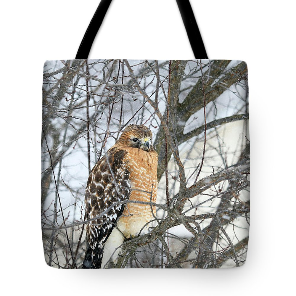 Hawk Tote Bag featuring the photograph Winter Hawk by Jackson Pearson