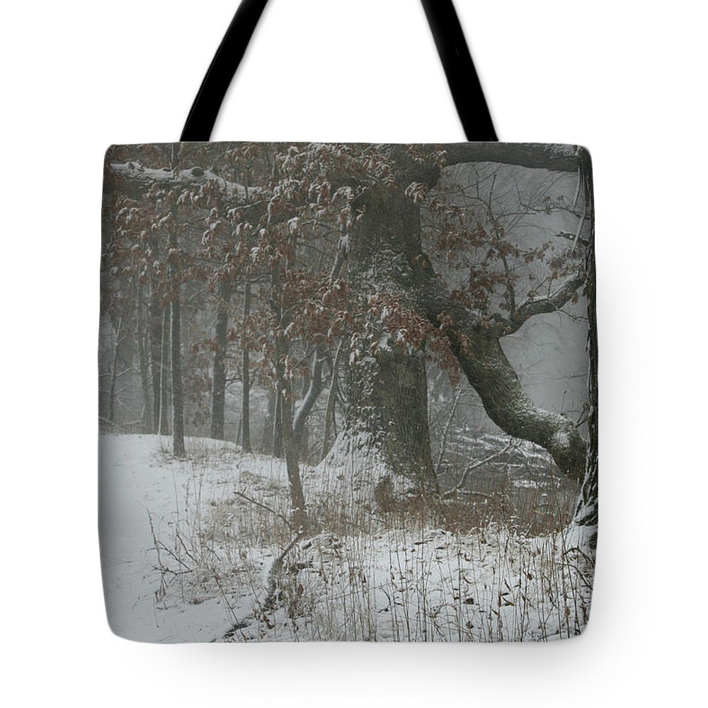Snow Tote Bag featuring the photograph Winter Walk by Dylan Punke