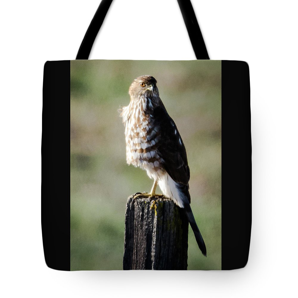 Cooper's Hawk Tote Bag featuring the photograph Wintery Cooper by Michael Allred