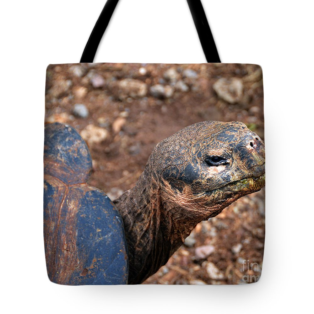 Chelonoidis Nigra Tote Bag featuring the photograph Wise Old Tortoise by Catherine Sherman