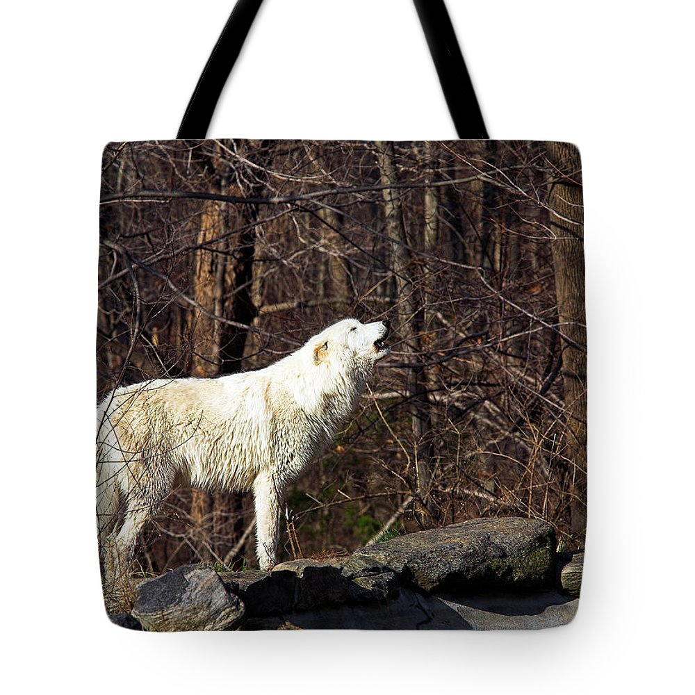 Howling Tote Bag featuring the photograph Wolf Howling In Forest by Ed Tepper