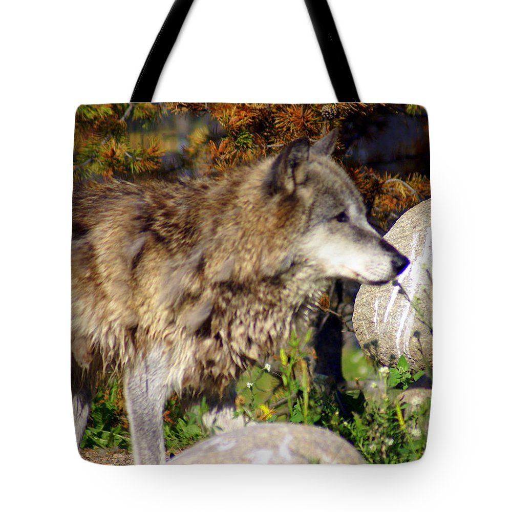Wolf Tote Bag featuring the photograph Wolf On Patorl by Marty Koch
