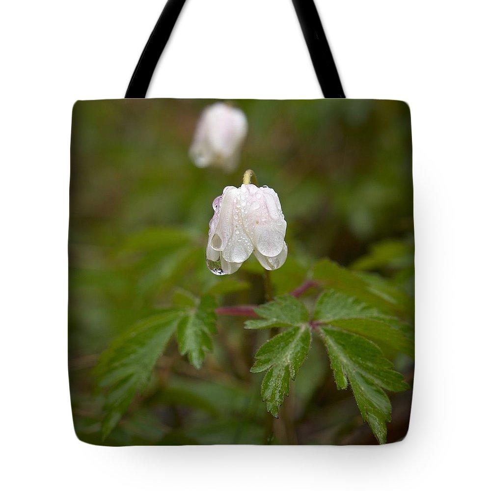 Lehtokukka Tote Bag featuring the photograph Wood Anemone Heavy From The Rain by Jouko Lehto