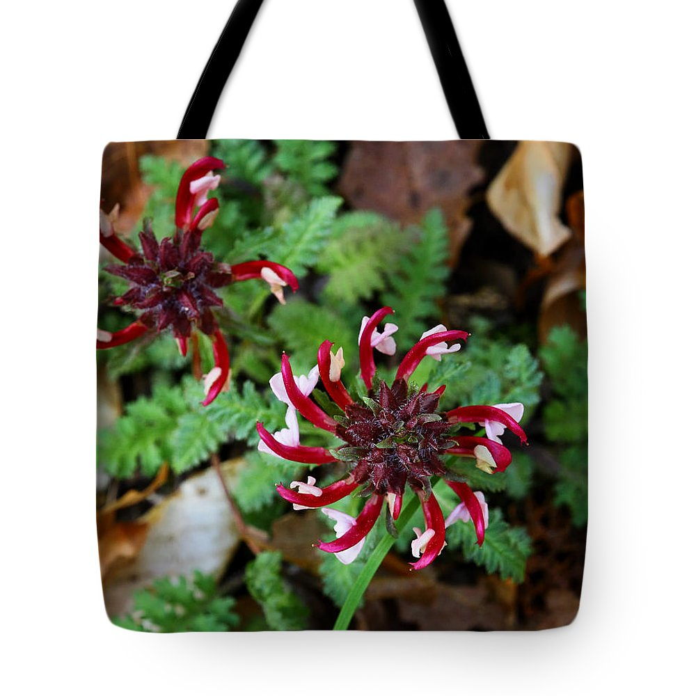 Wood Bentory Tote Bag featuring the photograph Wood Bentony In Lost Valley by Michael Dougherty