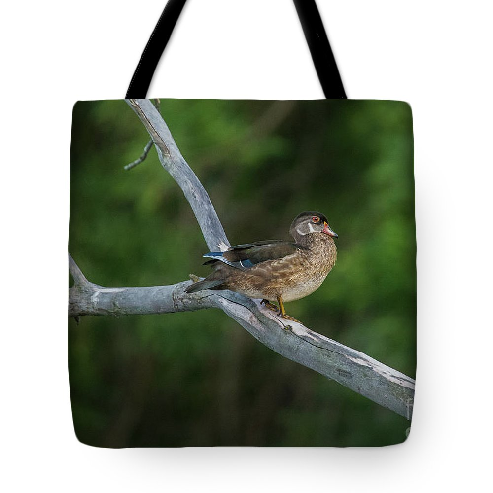 Wood Duck Tote Bag featuring the photograph Wood Duck Perched In Old Tree by Nikki Vig