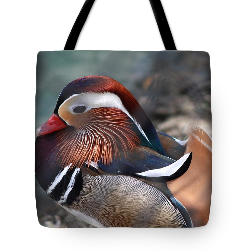 Sylvan Heights Bird Sanctuary 4 2015 Tote Bag featuring the photograph Wood Duck by Teresa Doran