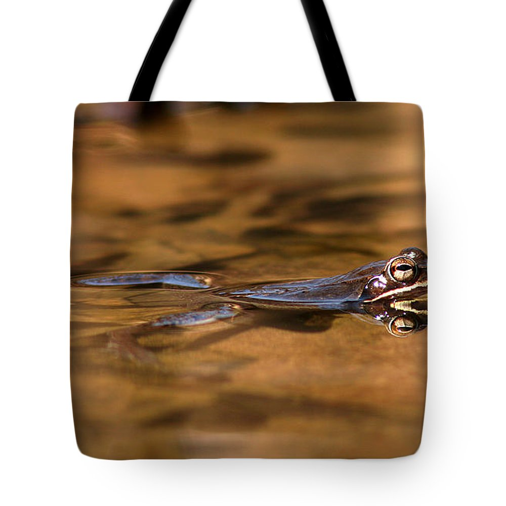 Frog Tote Bag featuring the photograph Wood Frog Reflecting On Golden Pond by Max Allen
