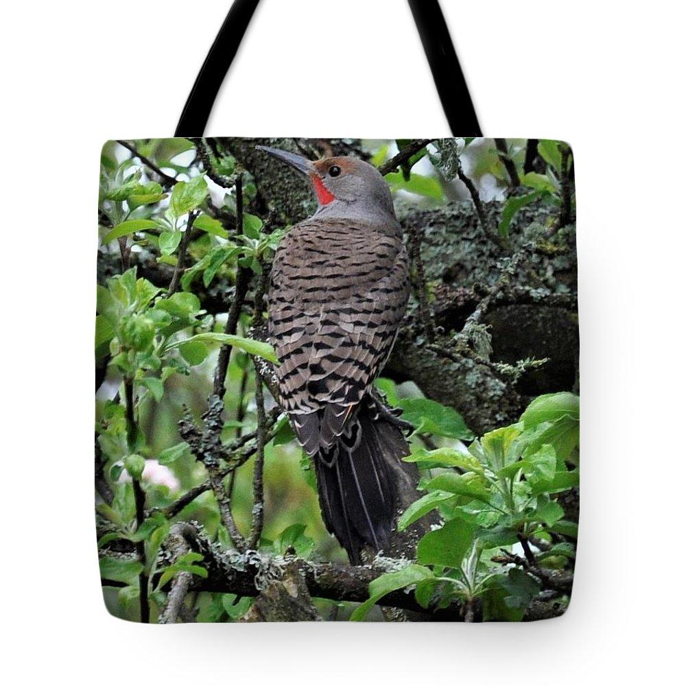 Woodpecker Tote Bag featuring the photograph Woodpecker In The Apple Tree by Sally Falkenhagen
