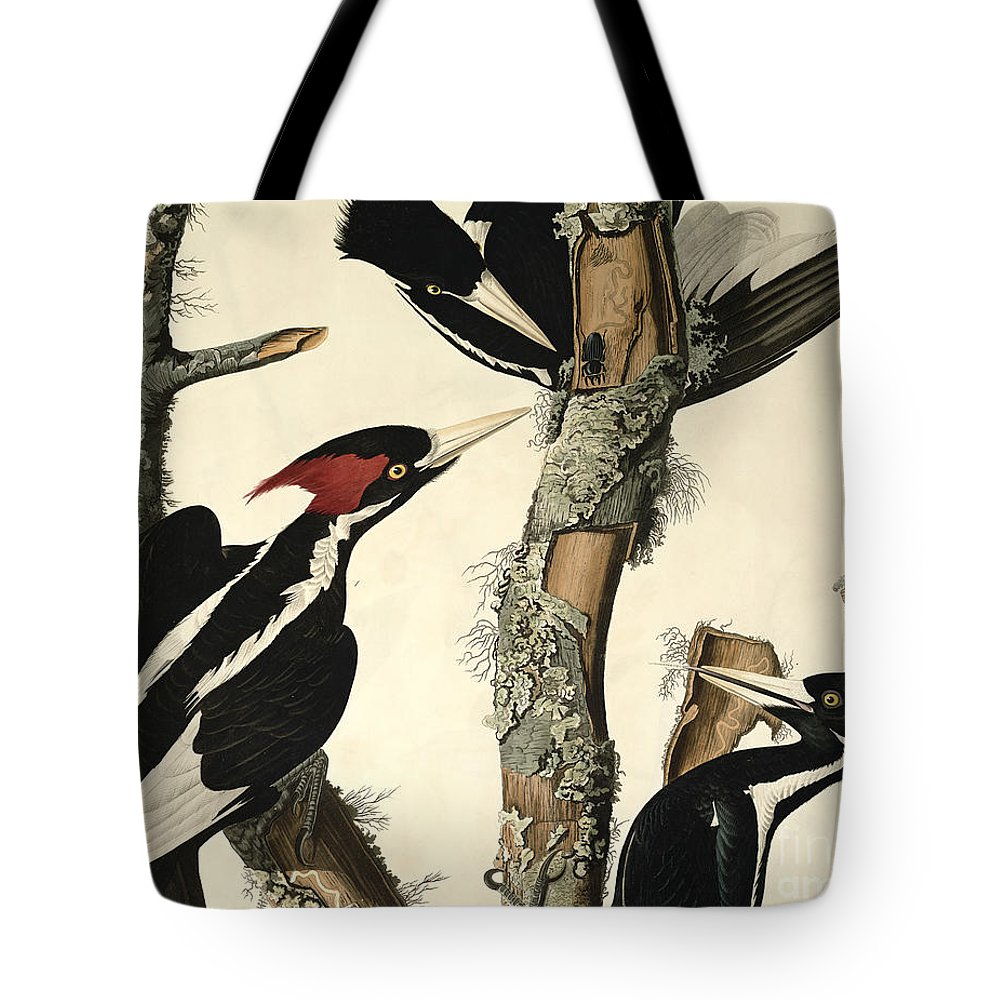 Woodpecker Tote Bag featuring the drawing Woodpecker by John James Audubon