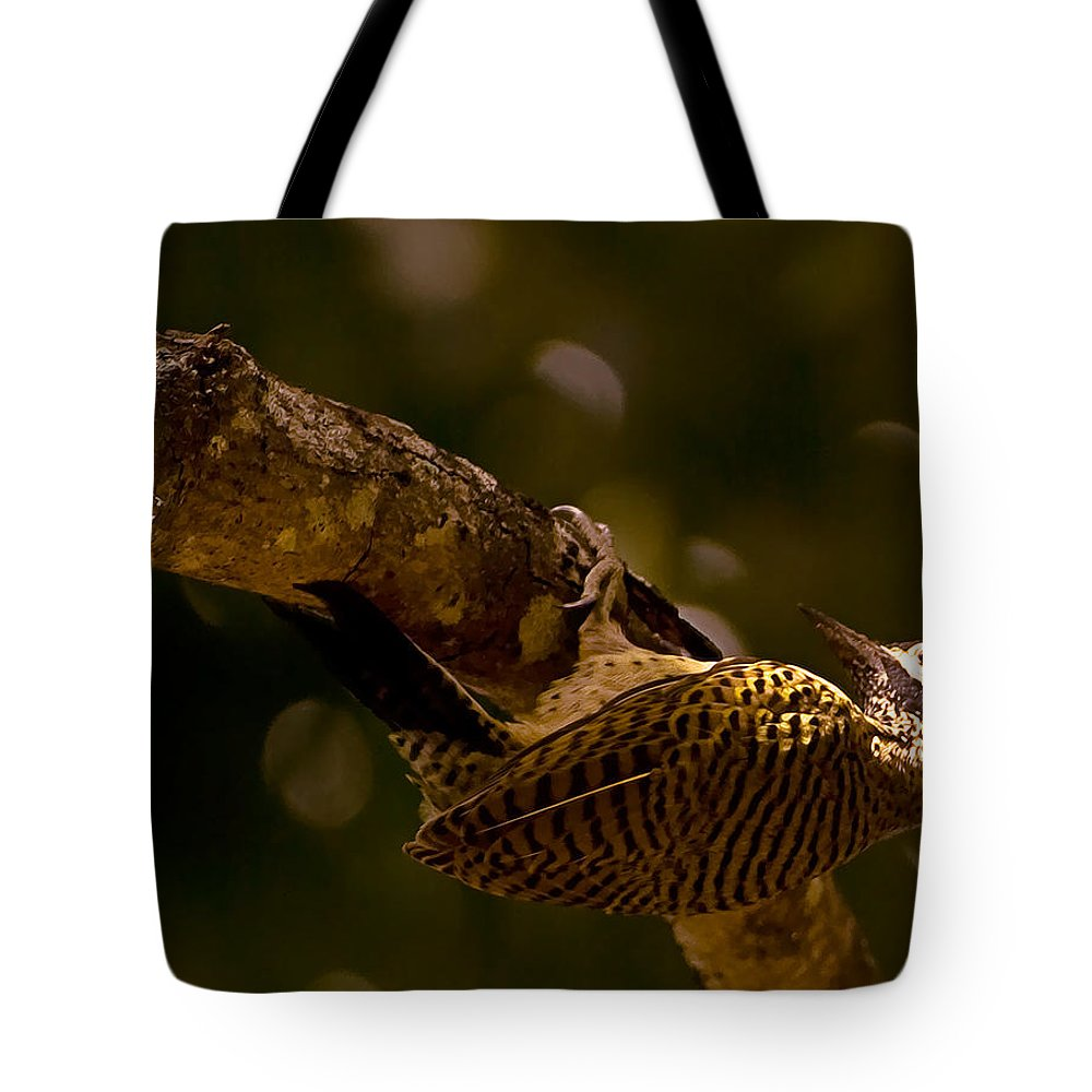 Woodpecker Tote Bag featuring the photograph Woodpecker by Galeria Trompiz