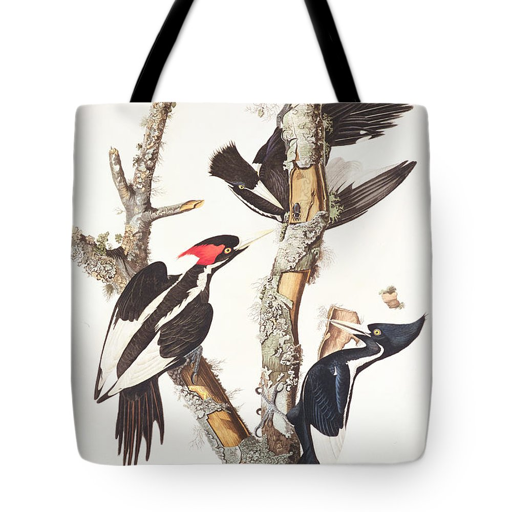 Ivory-billed Woodpecker Tote Bag featuring the painting Woodpeckers by John James Audubon