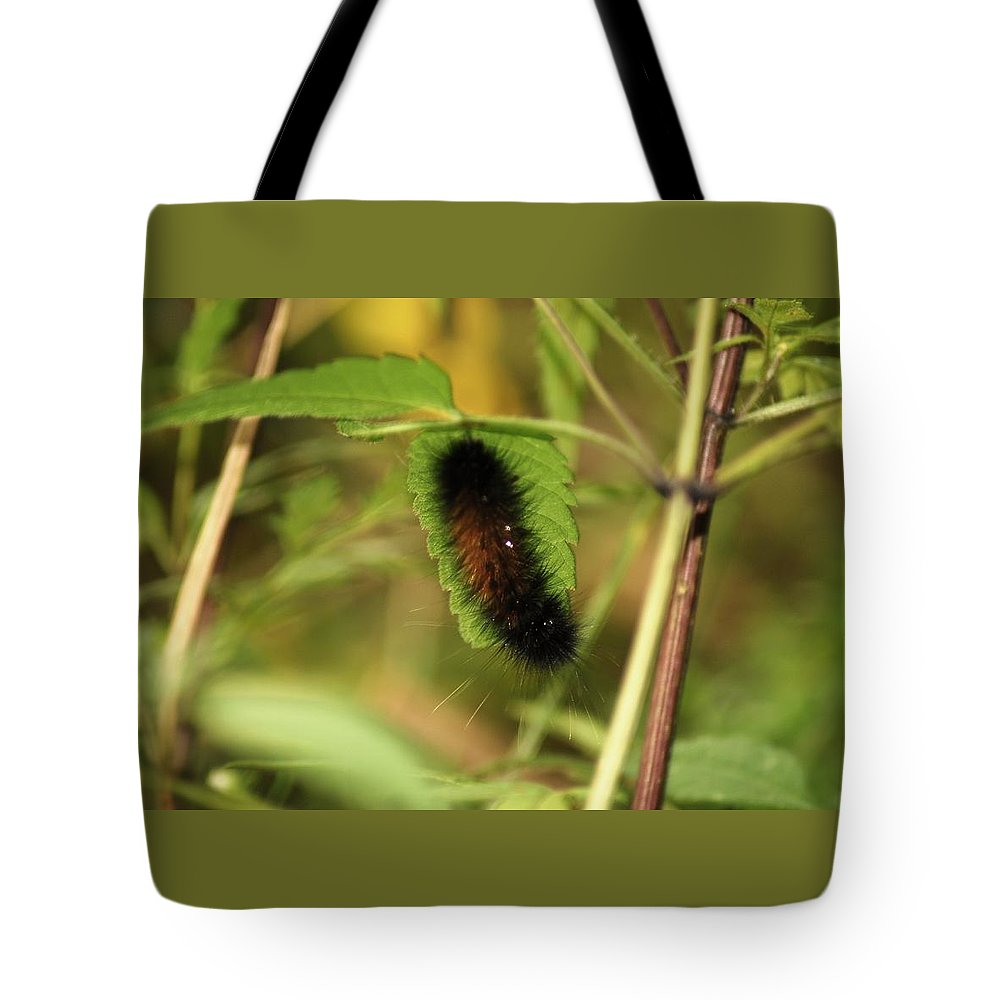 Bugs Tote Bag featuring the pyrography Woolibear by Donna Stiffler