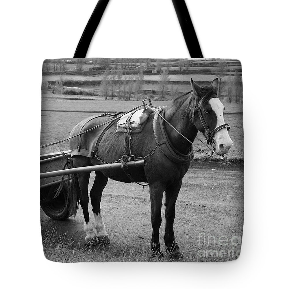 Cart Tote Bag featuring the photograph Work Horse And Cart by Gaspar Avila