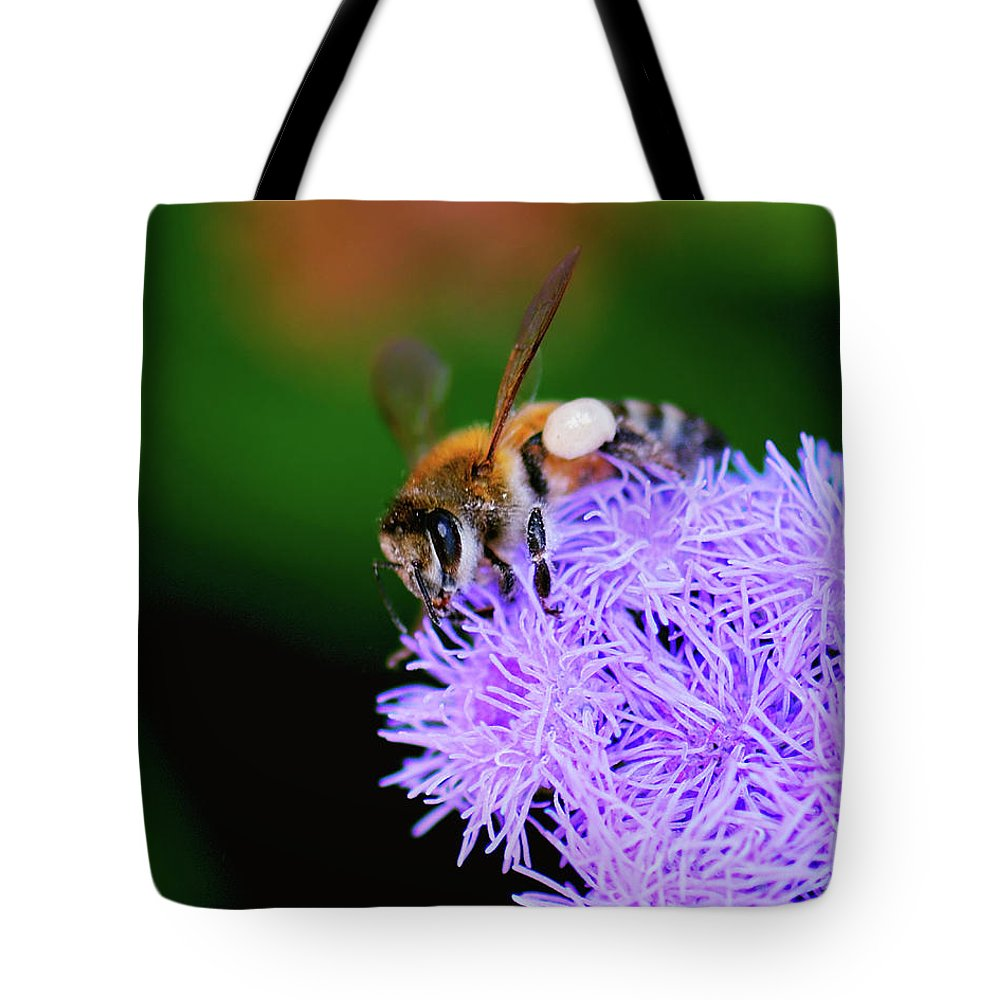 Honey Bee Tote Bag featuring the photograph Worker Bee by Betty LaRue