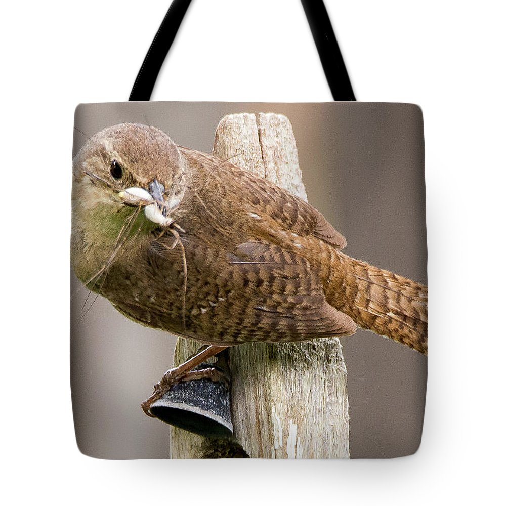 Baby Birds Tote Bag featuring the photograph Wren Ringing The Dinner Bell by Tim Kathka