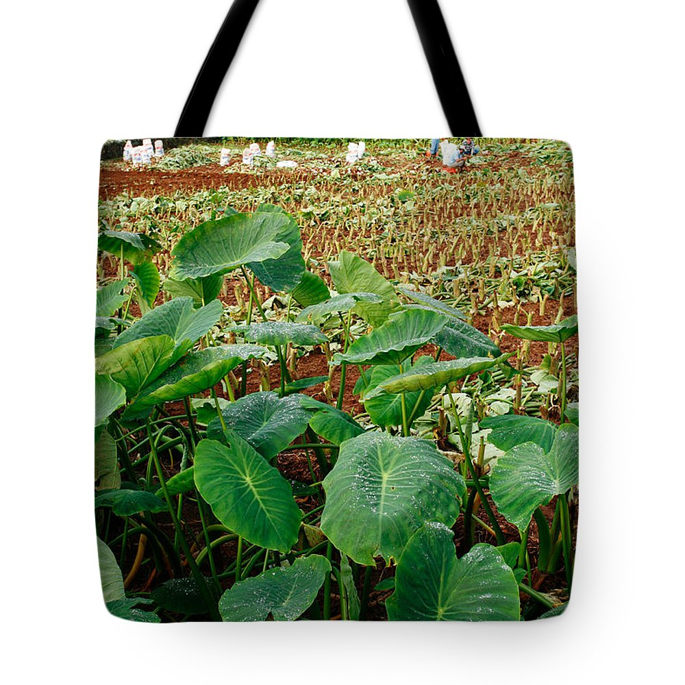 Agriculture Tote Bag featuring the photograph Yams Farm In Azores by Gaspar Avila