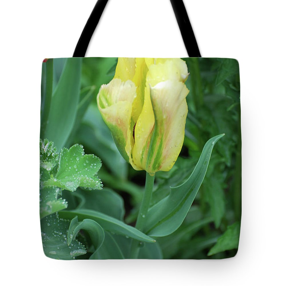 Tulip Tote Bag featuring the photograph Yellow And Green Striped Tulip Flower Bud by DejaVu Designs