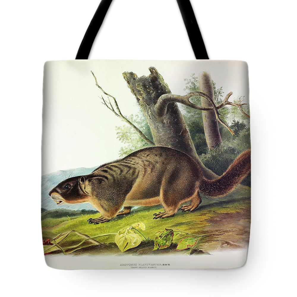 Yellow-bellied Marmot Tote Bags