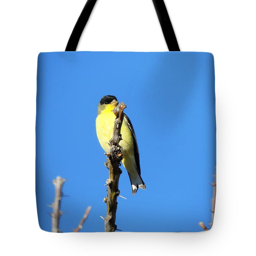 Yellow Bird Tote Bag featuring the photograph Yellow Bird by Bill Tomsa