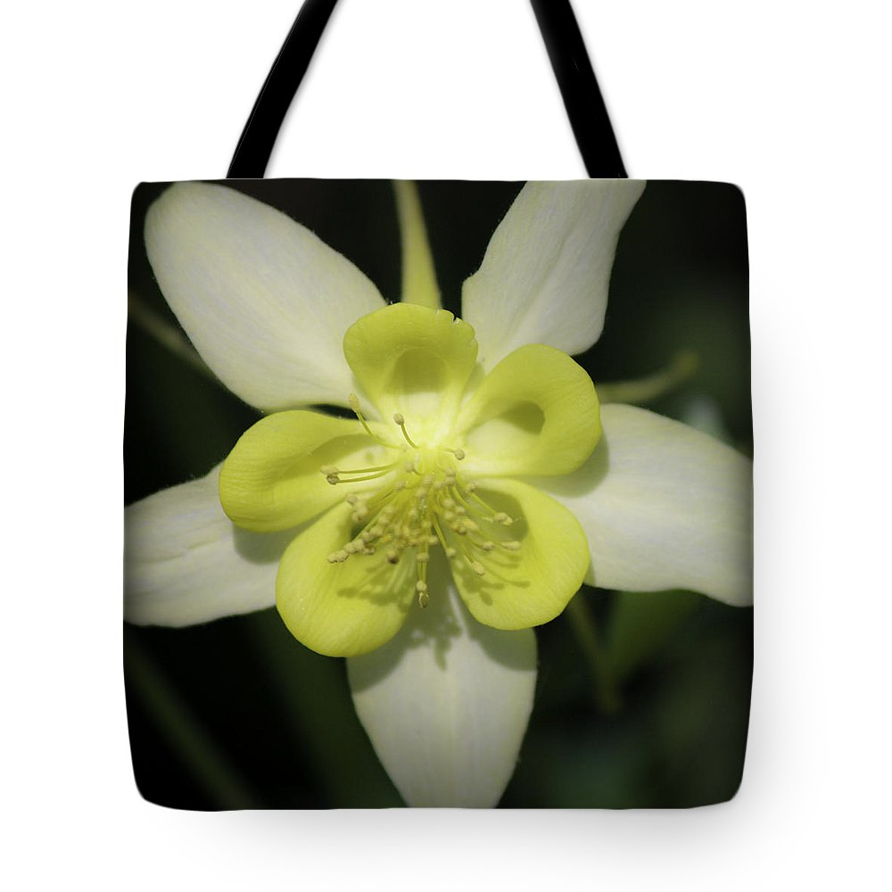 Columbine Tote Bag featuring the photograph Yellow Columbine Squared 2 by Teresa Mucha