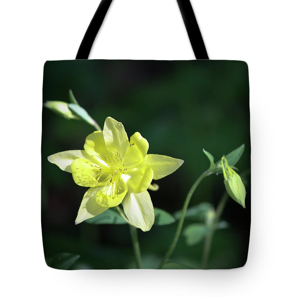 Columbine Tote Bag featuring the photograph Yellow Columbine Squared by Teresa Mucha