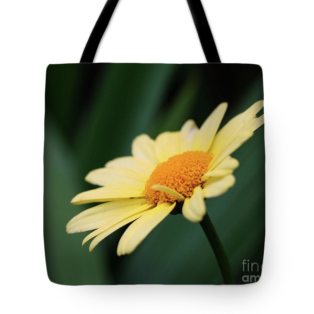 Daisies Tote Bag featuring the photograph Yellow Daisy by Smilin Eyes Treasures