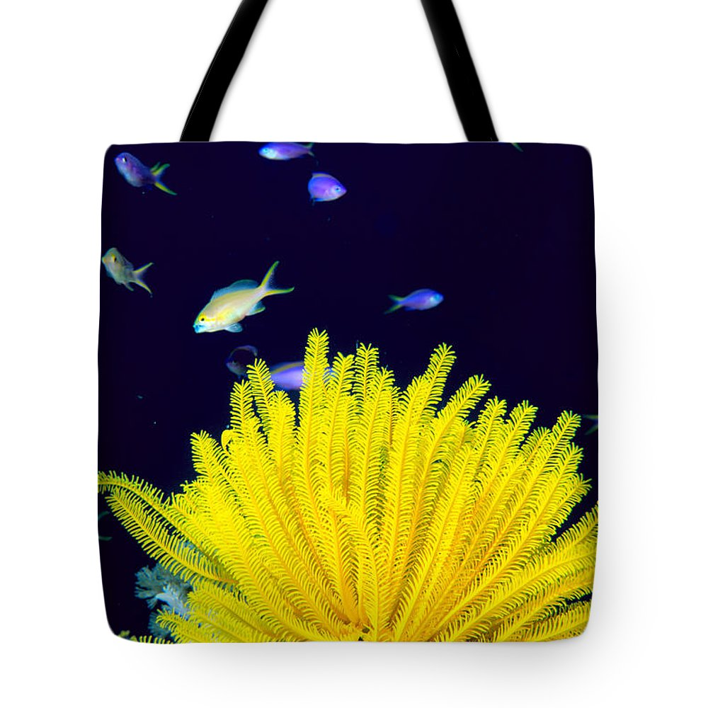 C1943 Tote Bag featuring the photograph Yellow Feather Star by Ed Robinson - Printscapes